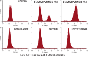 apoptosis_induced_dna_damage1